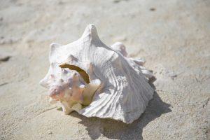 A big shell