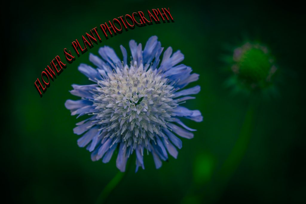 How to take stunning photographs of flowers and plants